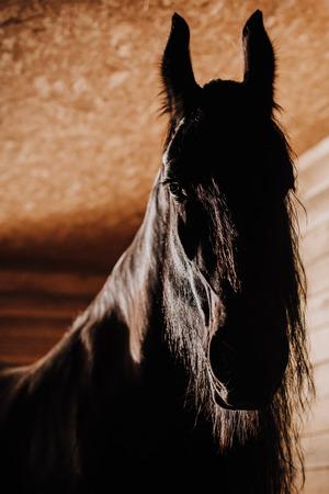 Mise au point sélective du beau cheval en stalle debout au zoo Banque d'images