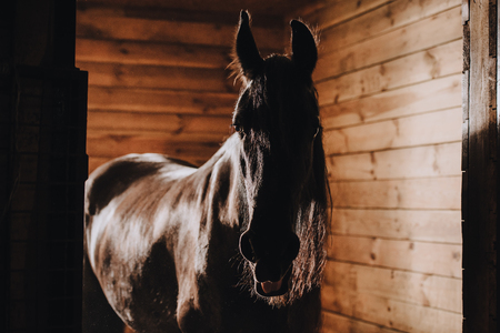 Mise au point sélective du beau cheval en stalle debout au zoo