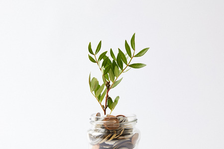 coins in glass jar with growing plant isolated on white Zdjęcie Seryjne