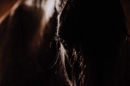selective focus of beautiful horse in standing stall at zoo 版權商用圖片
