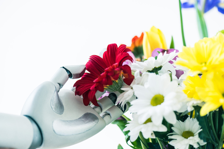 close-up view of robot touching beautiful flowers isolated on white