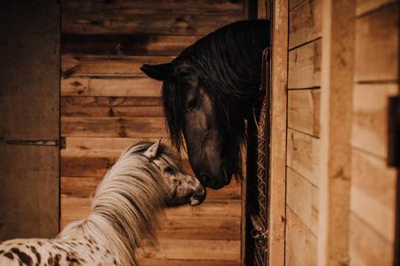 Mise au point sélective du beau cheval et poney en stalle debout au zoo