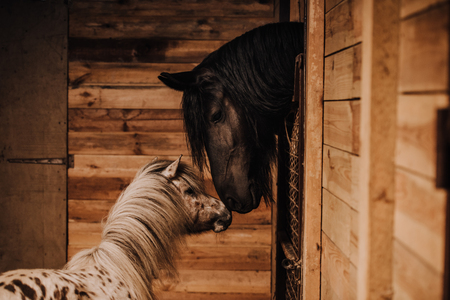 selective focus of beautiful horse and pony in standing stall at zoo Imagens