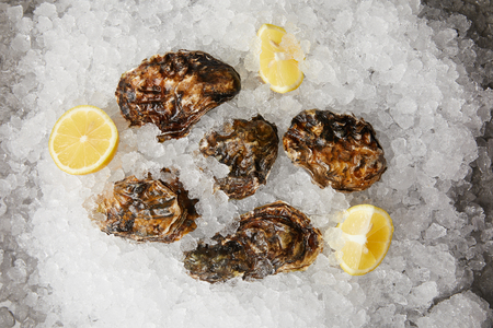 Large oysters served with lemons on ice