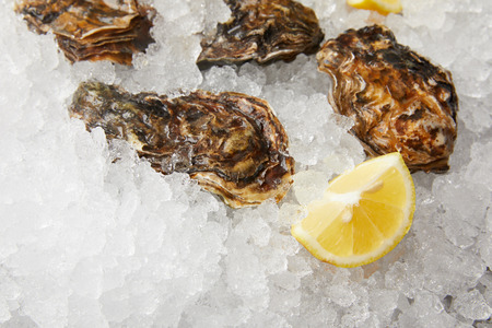 Cooled oysters refrigerated on ice with lemon Stockfoto