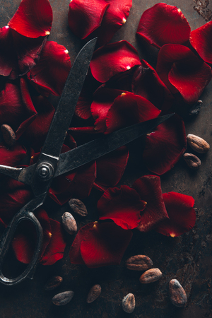 top view of vintage scissors, red rose petals and cocoa beans on dark surface
