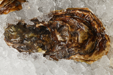 Gourmet seafood oyster chilled on ice