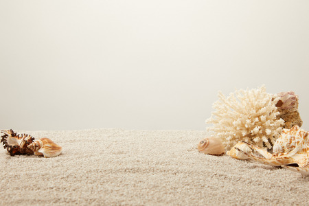 close up view of arranged coral and seashells on sand on grey backdrop Stock Photo