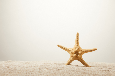 close up view of sea star on sand on grey background Banco de Imagens