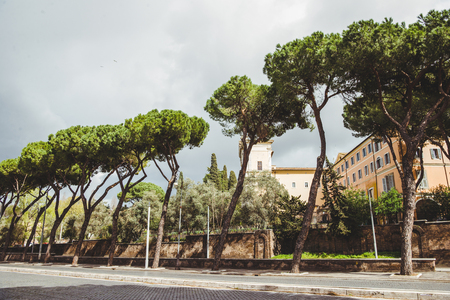 row of beautiful decorative pines growing on street of Rome, Italy