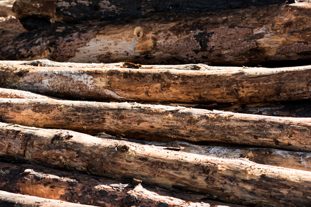full frame image of timber logs placed in row Stockfoto