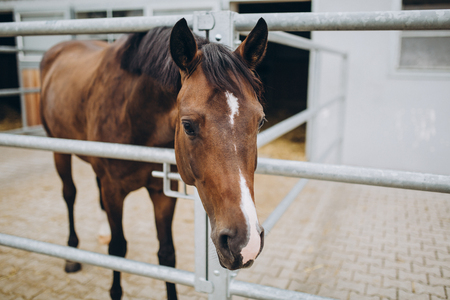close up view of beautiful brown horse in stable, stuttgart, germany