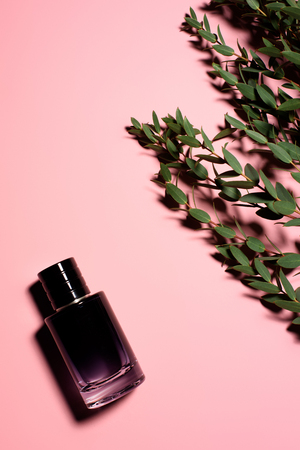 top view of glass bottle of perfume with green branches on pink surface