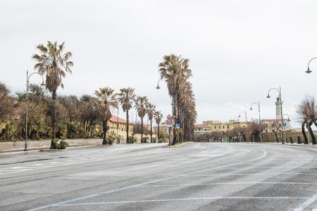 row of palm trees surrounding road at european city, Anzio, Italy