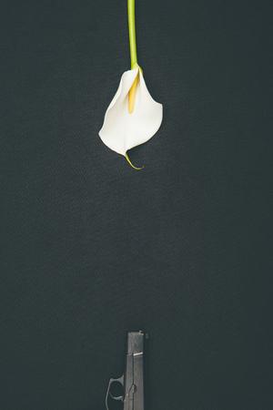 Gun with white calla flower isolated on black Zdjęcie Seryjne