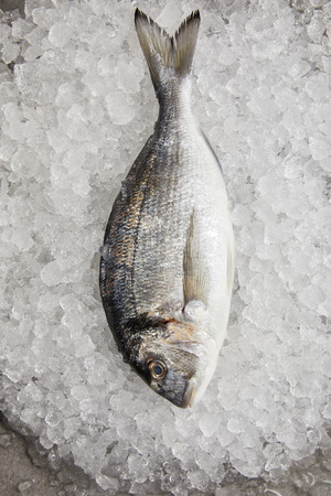 top view of raw gilt-head bream on crushed ice