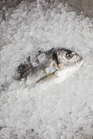 top view of raw gilt-head bream incrushed ice Reklamní fotografie - 106793497