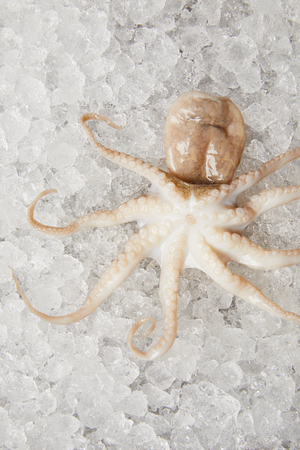 close-up shot of raw octopus on crushed ice