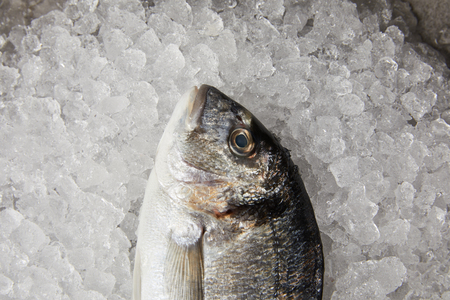 close-up shot of raw gilt-head bream on crushed ice