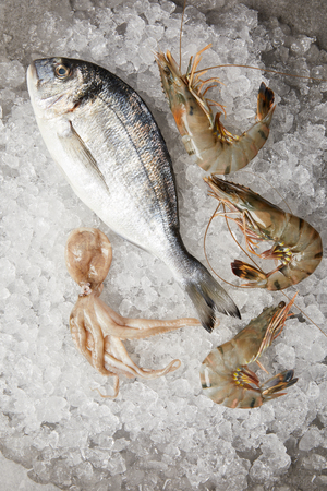 top view of raw gilt-head bream and prawns on crushed ice
