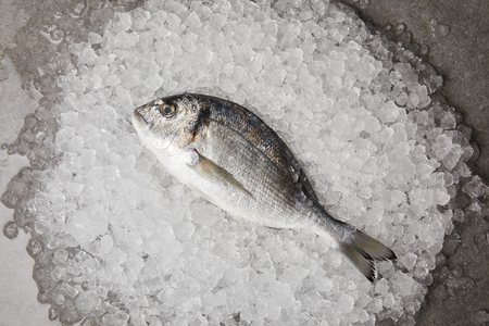 top view of raw gilt-head bream on crushed ice and on concrete surface