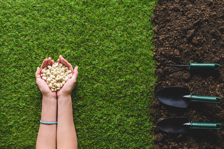 cropped image of woman holding seeds and gardening tools on soil