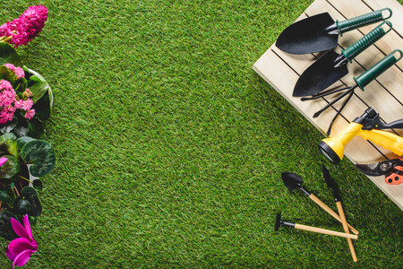 top view of flowers and arranged gardening equipment on planks