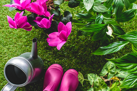 top view of rubber boots, flowers and watering can