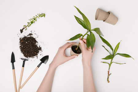 partial view of woman planting green plant with gardening tools and flowerpots around isolated on white