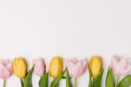 flat lay with pink and yellow tulips isolated on white Stock Photo