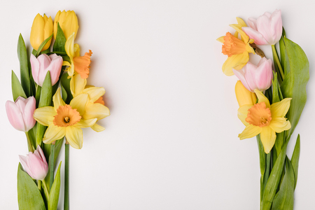 flat lay with arranged beautiful tulips and narcissus flowers isolated on white Stock Photo