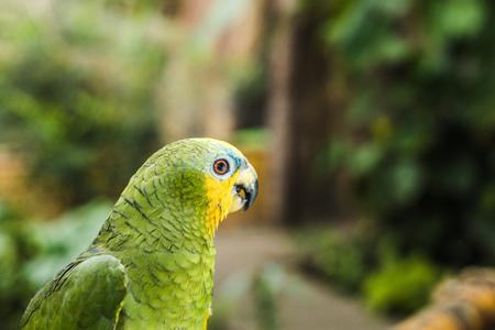 close-up shot of beautiful green afrotropical parrot