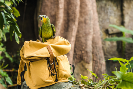 adorable green afrotropical parrot perching on vintage yellow backpack in rainforest Stock fotó