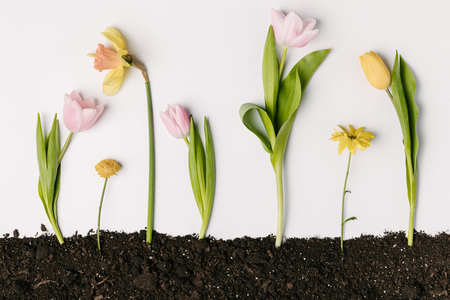 flat lay with various beautiful flowers in ground isolated on white Stok Fotoğraf