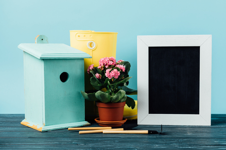 close up view of Kalanchoe in flowerpot, rubber boots, birdhouse, gardening equipment and empty blackboard on wooden tabletop on blue