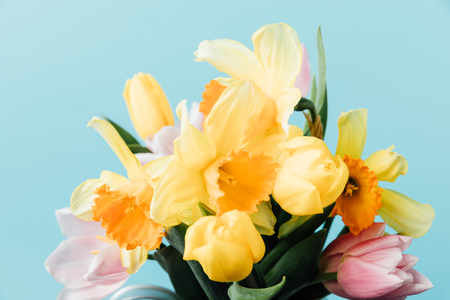 close up view of beautiful tulips and daffodils isolated on blue 版權商用圖片