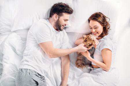 overhead view of young couple in love with yorkshire terrier lying on bed together