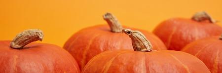 horizontal view of fresh ripe bright pumpkins on orange