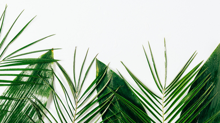 flat lay with assorted green foliage with water drops on white backdrop Stockfoto