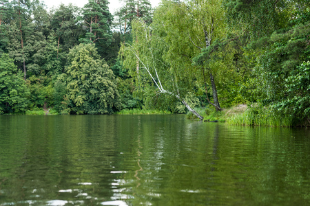 scenic view of calm lake with green trees on bank