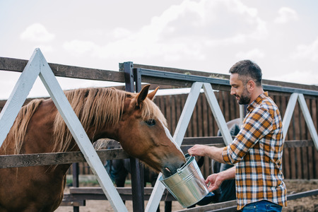 side view of farmer holding bucket and feeding horse in stable
