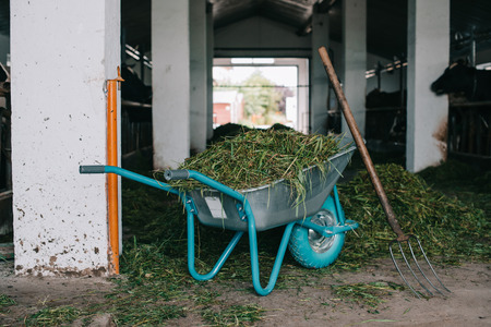 wheelbarrow with grass and pitchforks in stall at farm Stok Fotoğraf