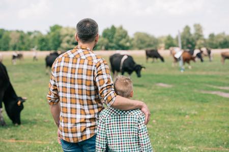 Vista posterior de padre e hijo juntos y mirando a las vacas que pastan en la granja