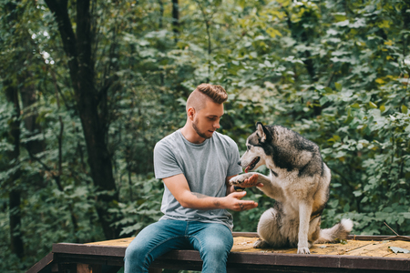 handsome man holding paw of obedient siberian husky dog 写真素材