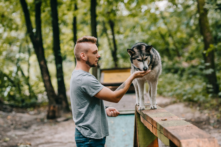 dog trainer with husky on dog walk obstacle in agility trial