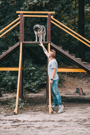 cynologist training with siberian husky dog on stairs obstacle