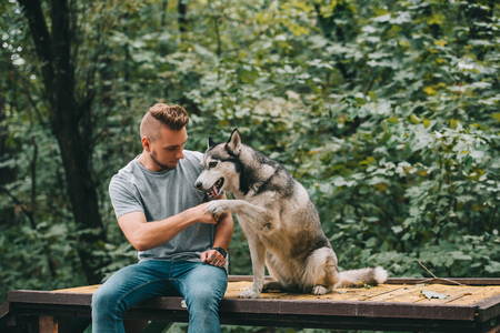 cynologist holding paw of obedient husky dog