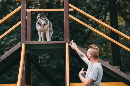 dog trainer with siberian husky dog on stairs obstacle 写真素材