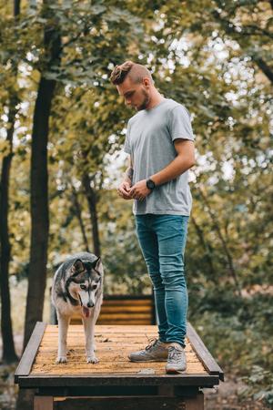cynologist training siberian husky on dog walk obstacle