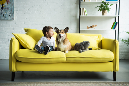 happy child sitting on yellow sofa with pets